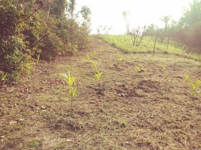 Prefeitura ajudará a recuperar áreas degradadas com árvores